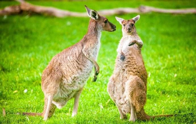 南半球的期待-從新西蘭到澳大利亞
