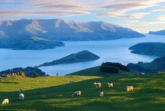 新西兰移民-澳星