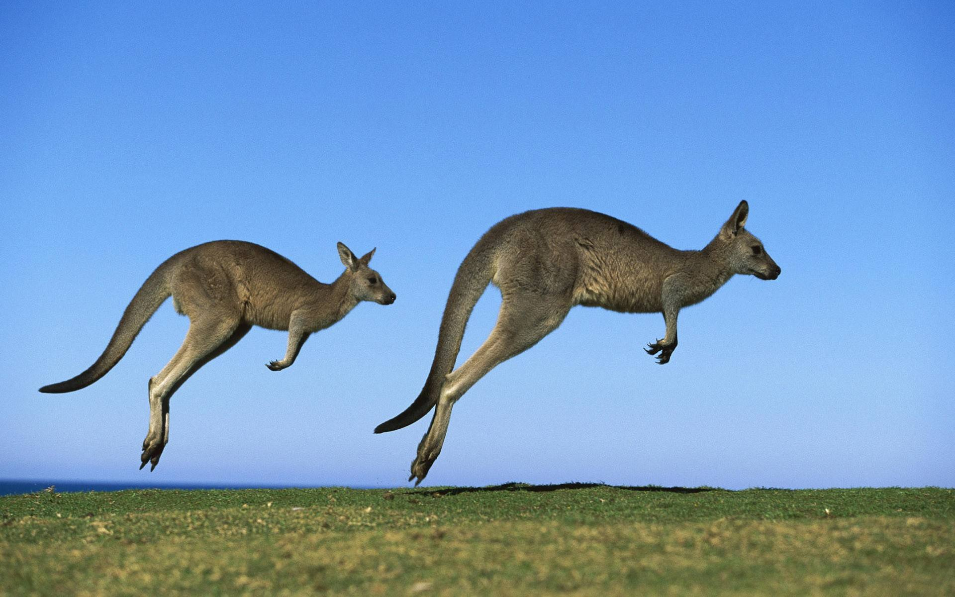 澳洲劳动力短缺技术移民或迎来春天